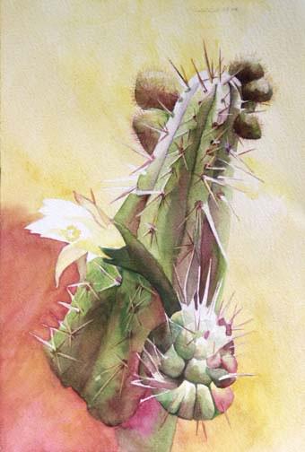 309-Cactus  Aquarelle 35x26