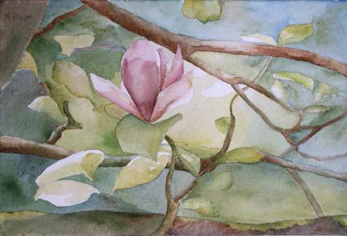 310-Magnolia aquarelle 40x50